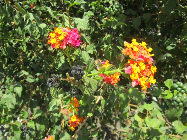 Flowers of Morocco