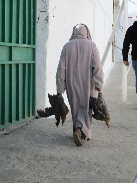 Fresh Chickens from the market-Asilah